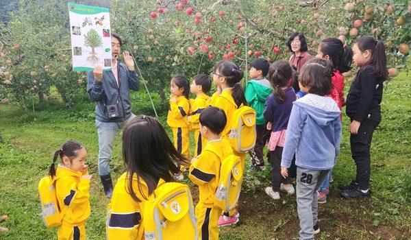 모동초병설유치원 사과수확체험, 피자만들기체험