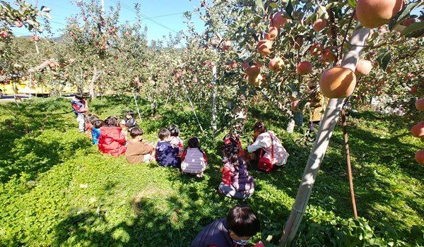 낙동초, 낙동동부초, 상영초, 중동초 병설 유치원 과수수확체험